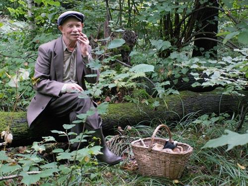 В лес по грибы…